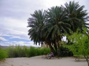 49. Rio Grande Village 6 april 2015 065