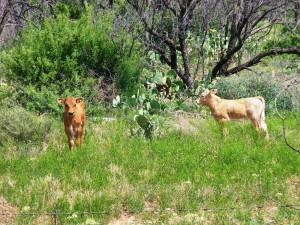 68. San Angelo State park 12  mei 2015 022