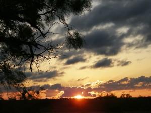 68. San Angelo State park 12  mei 2015 040