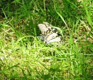 Kopie van 62. Palmetto State Park 4 mei 2015 034