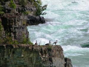 94. naar Kootenai Falls 25 juni 2015 018